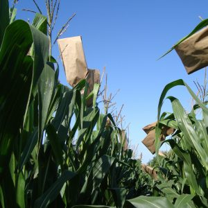 Tests are performed on a variety of crops including corn
