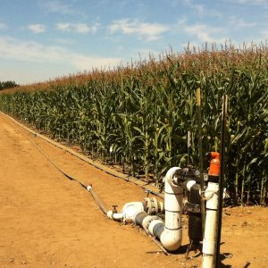 Crop tolerance trials at Davis, California, USA