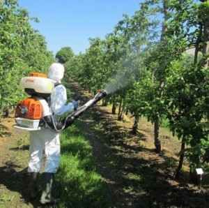 Orchard residue trial