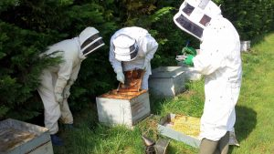SynTech Research undertakes field pollinator studies