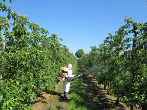 Top fruit fungicide trial treatment