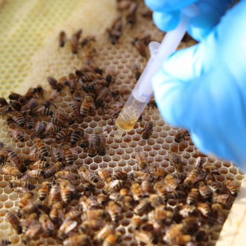 SynTech N. America experts provide pollinator study training