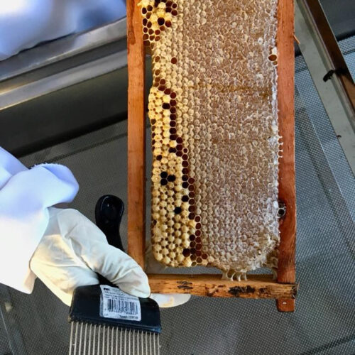 SynTech's Global Pollinator Field Testing Capabilities