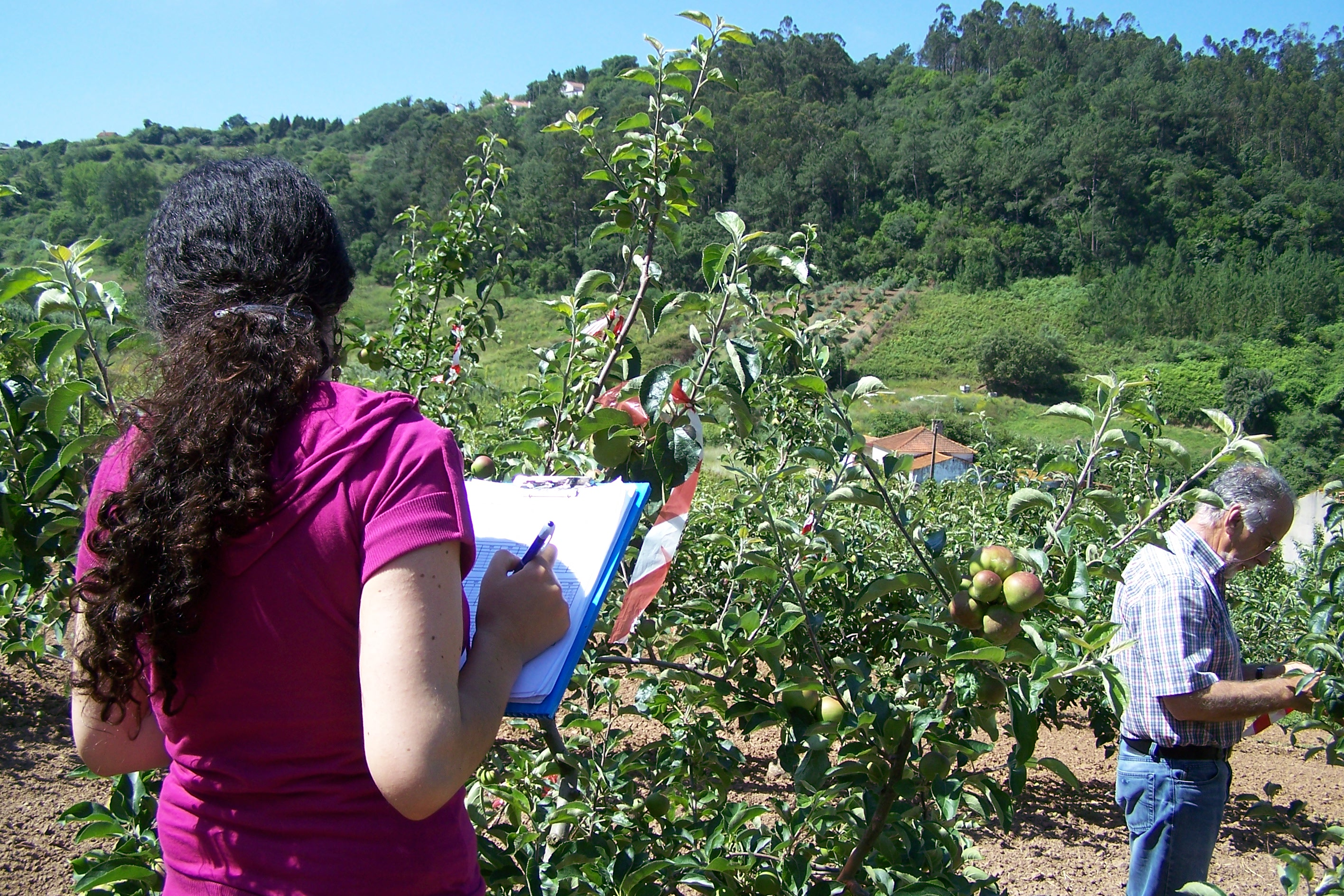 Apple insecticide assessment