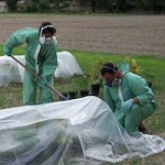 Herbicide volatility trial