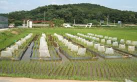 Syntech Research, South Korea, rice trials