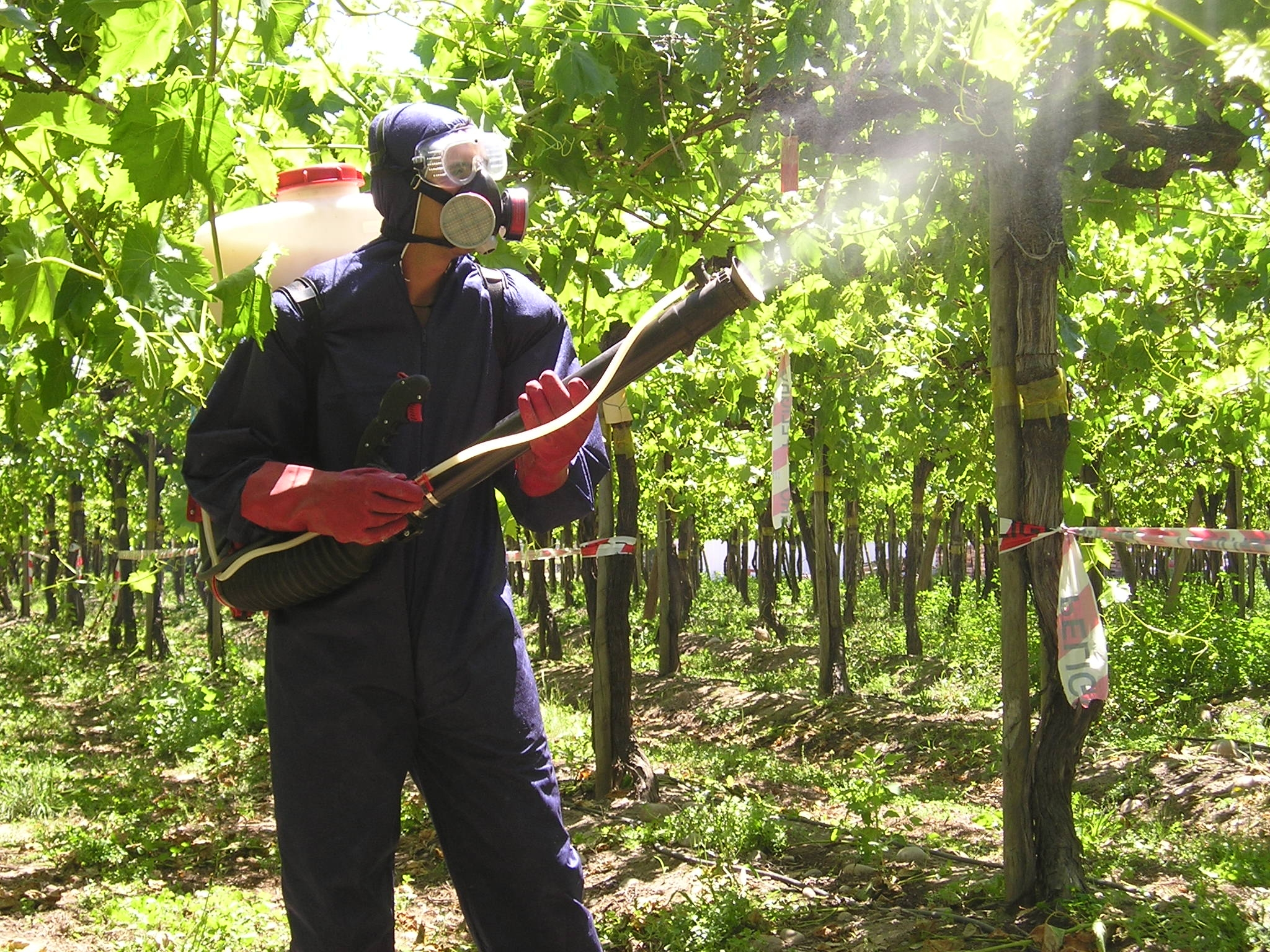 SynTech Research, Chile, spraying fruit trees