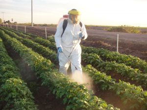 Potato trial, Mexico