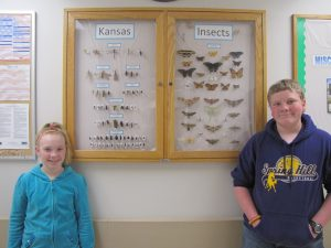 Young entomologists insect display at SynTech Research, Kansas