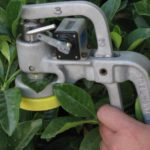 Dislodgeable foliar residues – hole punch samplin