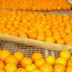 Fruit quality evaluation