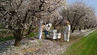 Honey bee testing