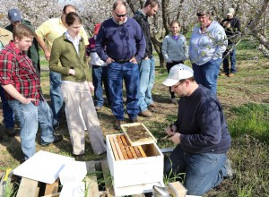 In-field experience provides valuable training for bee health unit staff