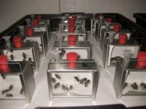 SynTech Spain has a long experience in honeybee studies