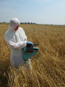 Insecticide trial sampling in cereals, Poland