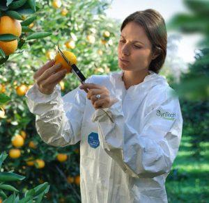 Citrus Trial sampling, Argentina 2015