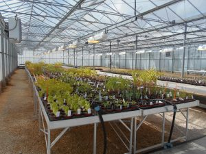 Non-target plant testing