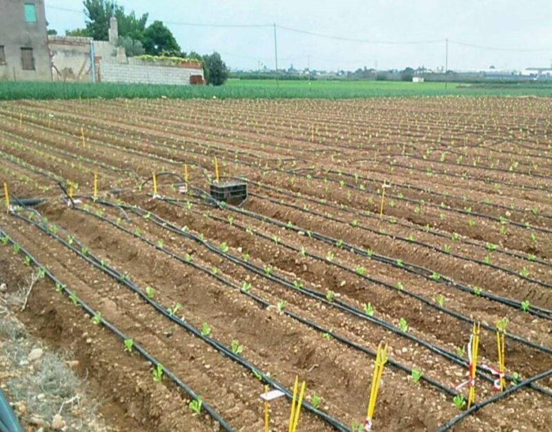 SynTech Portugal receives accreditation for fertilizer trials