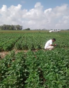 Regulated Soybean trial
