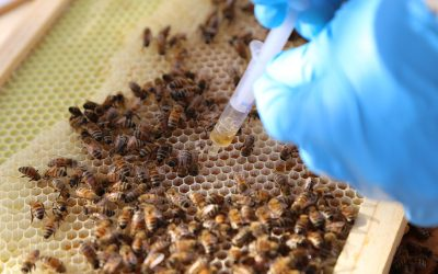 SynTech's US Pollinator Program kicks off