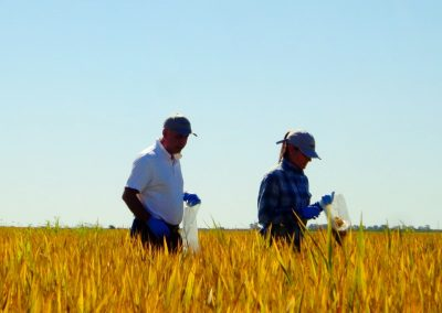 Rice Trial Argentina 2014