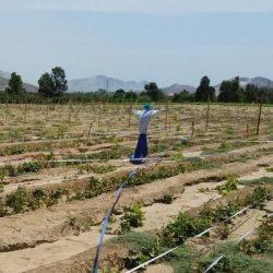 Vegetable pre-trial Ecuador