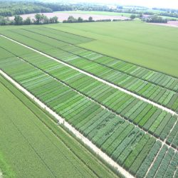 SynTech France cereal variety trials