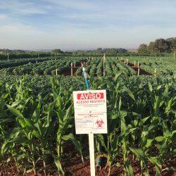 GMO Soybean trial in Brazil