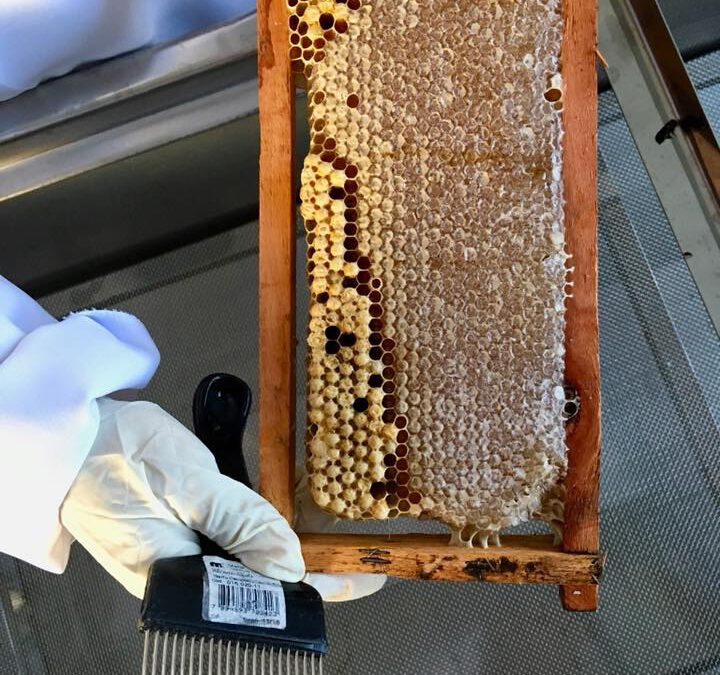 SynTech's Global Pollinator Field Testing Capabilities