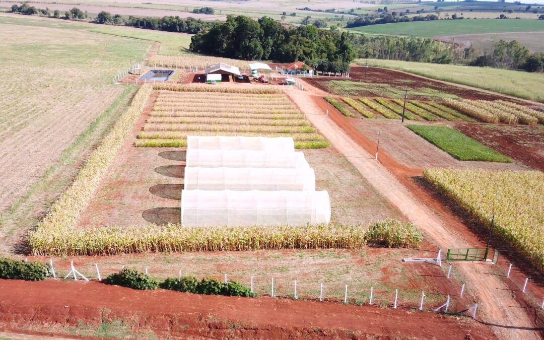 SynTech steps up expansion in Brazil with a new field station